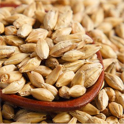 Barley Pet Food Ingredient